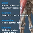 This #muscle belongs to the medial muscles of the sole of the feet. #learn more about its #anatomy w
