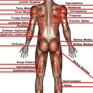 Welcome to the Information Highway of Massage Therapy! Massage Nerd is: the largest massage website