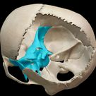 sphenoid-bone-skull-location