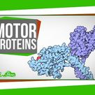 Motor Proteins: Tiny Pirates in Your Cells