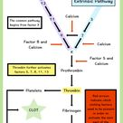 The clotting cascade made easy! Understand the intrinsic pathway, extrinsic pathway and common pathw