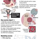 hpv vaccine - Google Search
