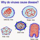 Why do viruses cause disease?