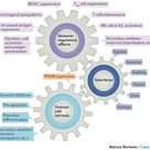 Image result for Interferons cellular actions-Nature Reviews