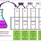 Dilution is the process of decreasing the concentration of a solute in a solution