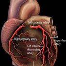 What Are the Functions of the Coronary Arteries?