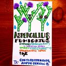 and today's #microbe, Aspergillus Fumigatus! Next time you're about to make a sandwich and find that