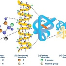 Proteins are macromolecules and have four different levels of structure
