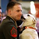 Marine Sgt. Ross Gundlach, of Madison, Wisc., gets a kiss from Casey, a four-year-old yellow labrado