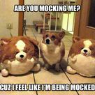 Are you mocking me?  AHAHAHAHAHA