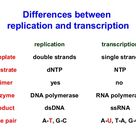 DNA replication is the biological process of producing two identical replicas of DNA