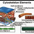 The components of the cytoskeleton in a cell are composed of microfilaments, intermediate filaments,
