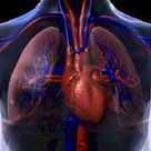 Anatomy of the Heart and Cardiovascular System