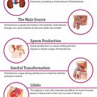 The Effects of Testosterone on the Body