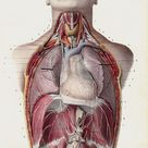 1853 Antique ANATOMY   #medical #medicine #illustration