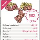 We've created a range of collectable cards featuring proteins from albumin to trypsin