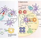 Cytokines in cancer pathogenesis and cancer therapy