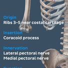 The pectoralis minor originates from the third to fifth ribs, and inserts on the coracoid process of