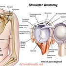 Shoulder Anatomy Front View and Joint Opened View
