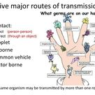 Five major routes of transmission