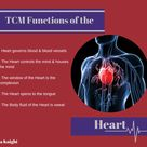 Functions of the Heart according to TCM