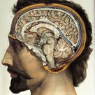 anatomy of the brain #vintage #medical #illustration