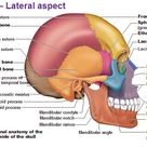 Human Skeleton Diagram Back - Health, Medicine and Anatomy Reference Pictures