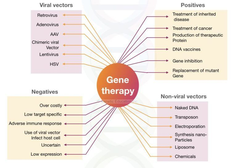 Gene Therapy summary: viral and non-viral vector with positives and negatives of gene therapy.