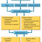 Charts and Figures: Inflammatory Response