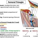 FEMORAL TRIANGLE (navel)-Lateral to Medial
