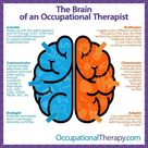 The brain of an occupational therapist!