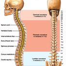 Understanding the Spine | ehealthMD