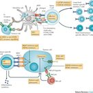 Combining immunotherapy and targeted therapies in cancer treatment