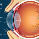 All about the conjunctiva of the eye, including primary functions and problems that affect your visi