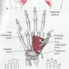 trigger point thumb http://robin-thomson.wix.com/massage-by-robin