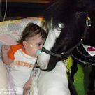 Therapy horse Magic.