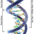 Molecular Genetics Worksheet