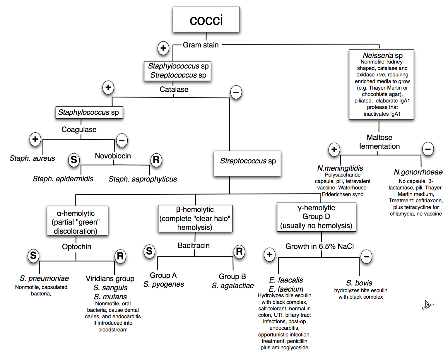 Top Unknown Gram Negative Bacteria Flow Chart Wallpapers