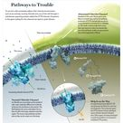 "Cystic Fibrosis: Pathways to Trouble [Illustration by AXS Biomedical Animation Studio, for ""A B"