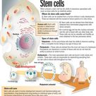 Umbilical cords blood banking for stem cells therapy