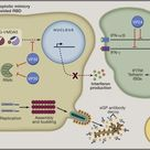 Cell: What is #Ebola & how can it be contained? FREE Review: https://ow.ly/CSkNL