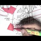 Respiratory System - Overview