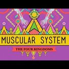 Big Guns: The Muscular System - CrashCourse Biology #31 - YouTube