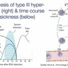 Pathogenesis of type III hypersensitivity and time course of serum sickness
