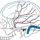XII. Surface Anatomy and Surface Markings. 2. Surface Markings of Special Regions of the Head and Ne