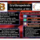 Erythropoiesis- Red Blood Cell (RBC) Creation