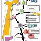 Primary immunodeficiency disorders are classified by which part of the immune system