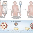 Treating B-cell cancer with T cells expressing anti-CD19 chimeric antigen receptors