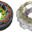 The nuclear pore complex is enormous, both in size and biological importance