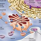 Summary of Endomembrane interactions